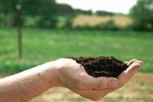 Screened Organic Topsoil free local delivery (Pottstown PA)
