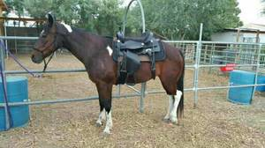Horse For Sale (North Las Vegas)