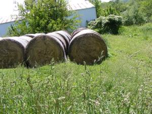 Hay 4x4 Round Bales Net Wrapped (MT. Vernon)