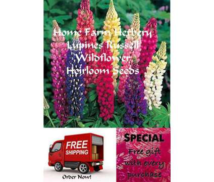 Lupines Russell Wildflower Heirloom Seeds, Order now, FREE shipping & a free gif