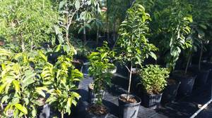 fruit plants sale, STARTING AT 10.00