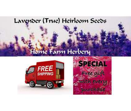 Lavender (True) Heirloom Seeds, Order now FREE shipping & a Free gift