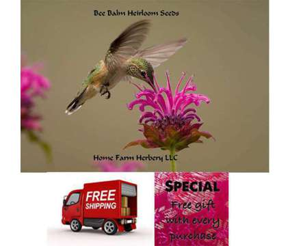 Bee Balm Heirloom Seeds, Order now, FREE shipping, Free gift