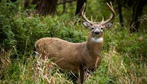 Looking for Hunting Turkey Deer Lease (West TN)