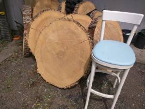Huge Ash tree rounds raw slab (Ridgedale area)