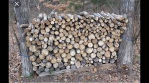 Firewood. Seasoned and green (Norman)
