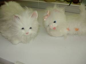 Pink bear and white furry kittens (Durham/North of Raleigh/Creedmoor)