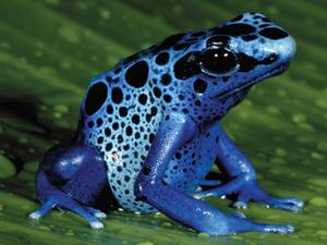 ISO: Poison Dart Frog, Vivarium, and Supplies (Downtown Memphis)