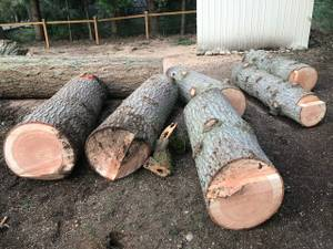 Free Cedar and Fir Wood (Woodinville, WA)