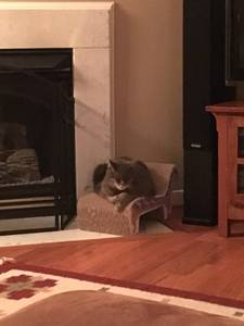 Cats for adoption (Charlottesville)