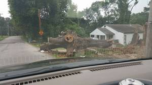 Free wood for removal of very large oak tree (Frayser)