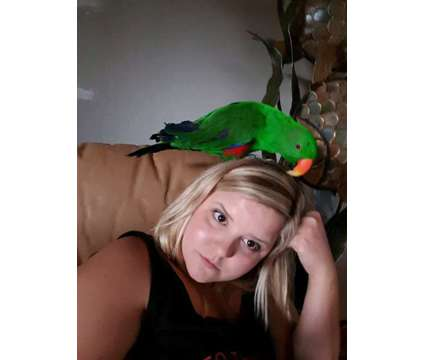 Please we advertised FREE to GET LOVERS. ECLECTUS
