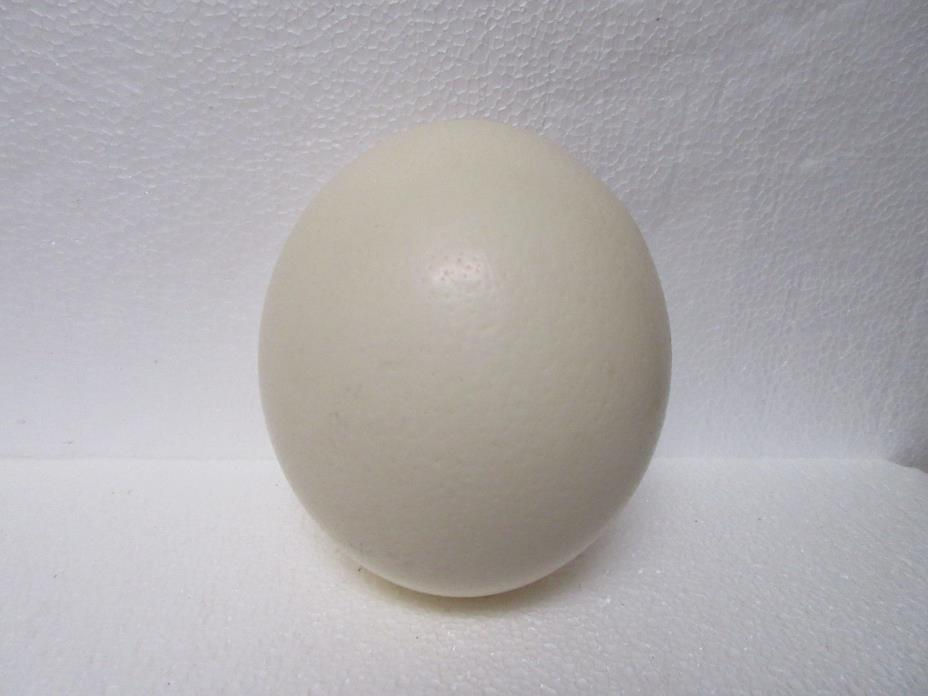 OSTRICH EGG SHELL ART CRAFTS PAINT ENGRAVE DISPLAY EASTER 6