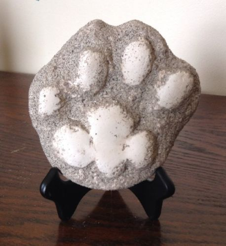 LOT of 10 Mountain Lion Animal Track Cast MASCOT Puma Panther Cougar Print
