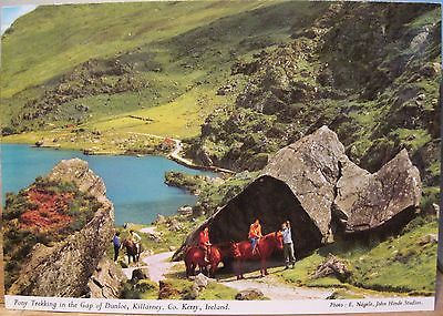 Irish Postcard PONY TREKKING KIllarney Gap of Dunloe Ireland Nagele Hinde 2/307