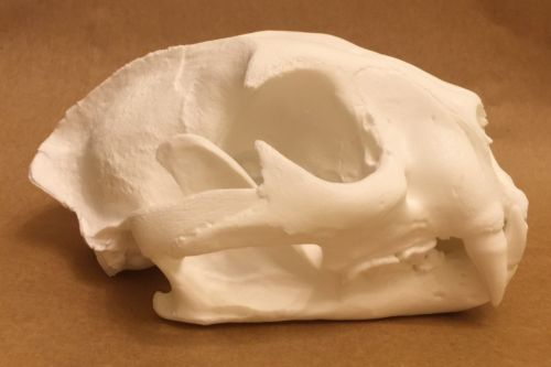 Replica Mountain Lion Skull