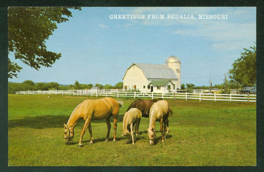 Greetings from Sedalia Missouri Palomino Mare Colts Horses Barn Postcard