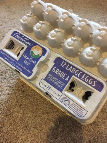 Egg Cartons Cardboard