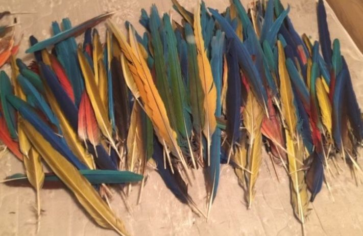 huge lot of macaw/parrot tail feathers