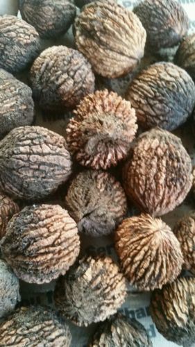 25 Black Walnut Seeds