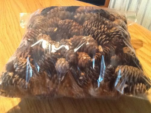 Pinecones for Crafting, one gallon 1.5 inch clean dry Wreaths Craft