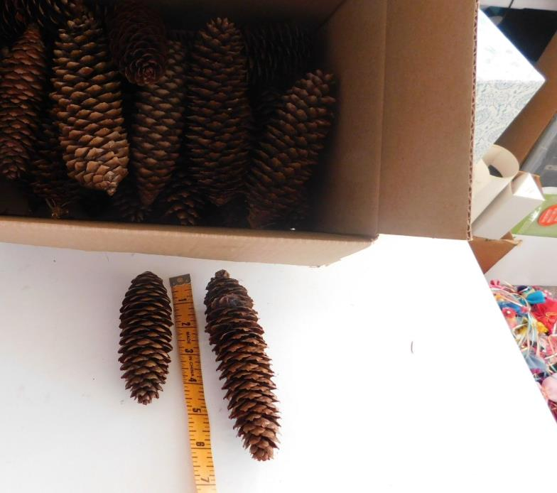 26 Large  Long Pine Cones Holiday Crafts Decor  4.5-6.5