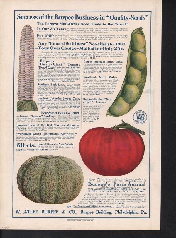 1909 ATLEE BURPEE TOMATO PEA MELON SWEET CORN GARDEN AD15083