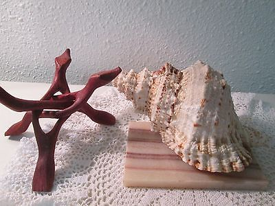Large Shell With Stand Perfect Shabby Chic Decor Nautical Home Flower Vase