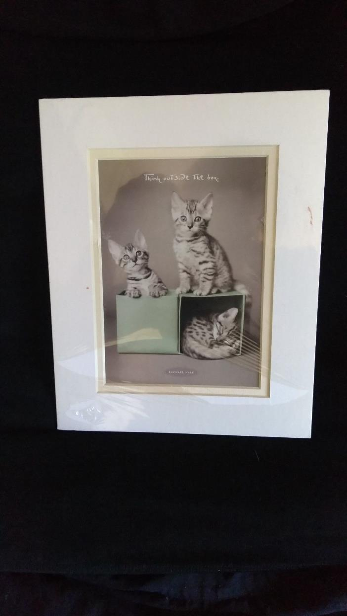 Matted Rachel Hale Kitten Photograph 8