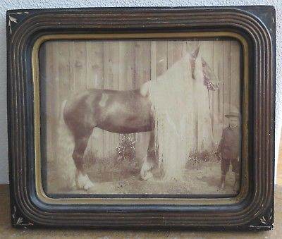 Primative long hair horse albumen antique photo eastlake frame folk art charmer