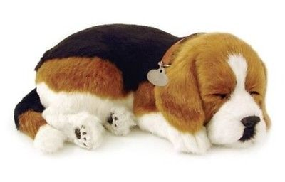Beagle Animated Pet