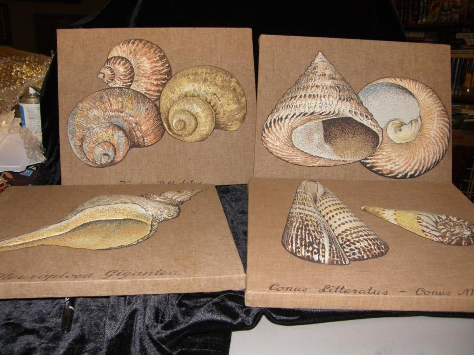 3-D CANVAS BEACH- SEASHELL- OCEAN THEME   ----- 4 PICTURES AND SHELLS TOO