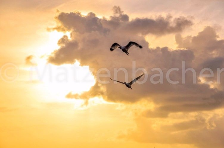 Digital photo picture wallpaper Sunset Foto Bird Background Free Shipping