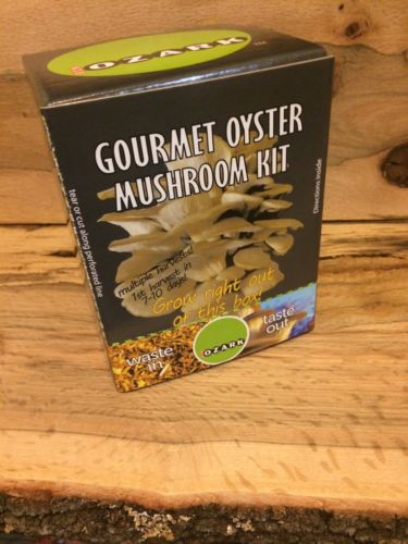 ECO OZARK OYSTER MUSHROOM INDOOR GROW KIT