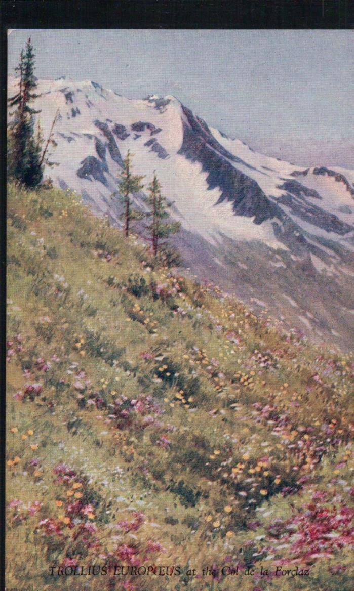 Unused ALPINE FLOWERS Vintage Postcard