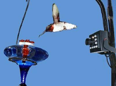 NEW Hawk Eye High Definition Nature Cam Bird Watching Spy Video Camera