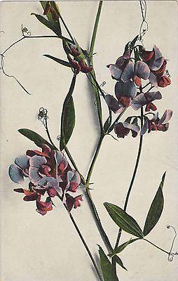 Floral, Dr. Trenkler Co.   1894-1972, Circa 1907 Postcard