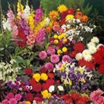 100 Bulb Garden