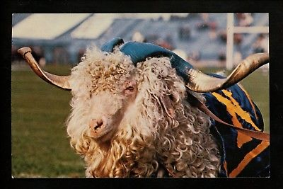 Military postcard USN Navy US Naval Academy, Annapolis, MD Bill the Goat mascot