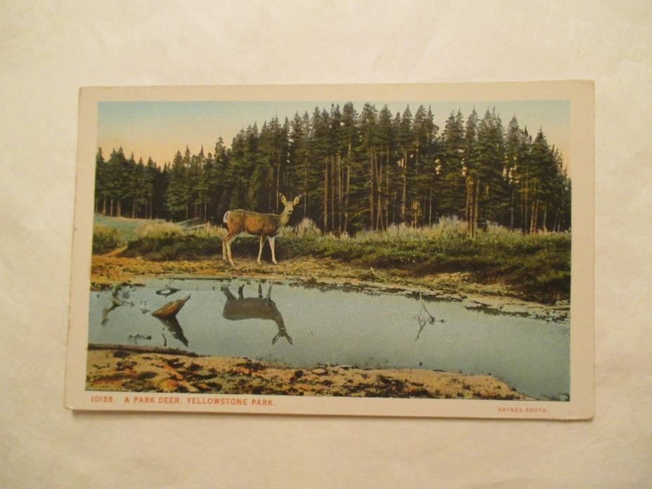 A Park Deer Yellowstone Park Postcard