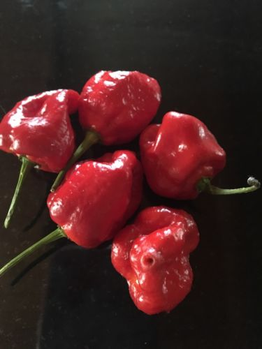 100 Seeds: Scorpion Chili, Hawaiian Chili, Chocolate Habanero,Carolina Reaper