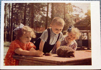 1963 Soviet postcard YOUNG NATURALISTS Children are watching the hedgehog