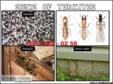 Termites Home Inspector