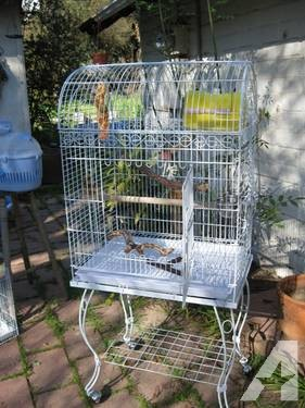 Beautiful Parrot Cage and more