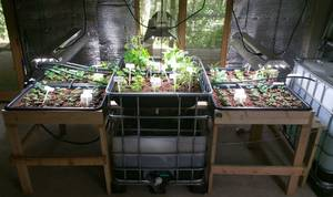 Aquaponic and Hydroponic Systems (Dahlonega)