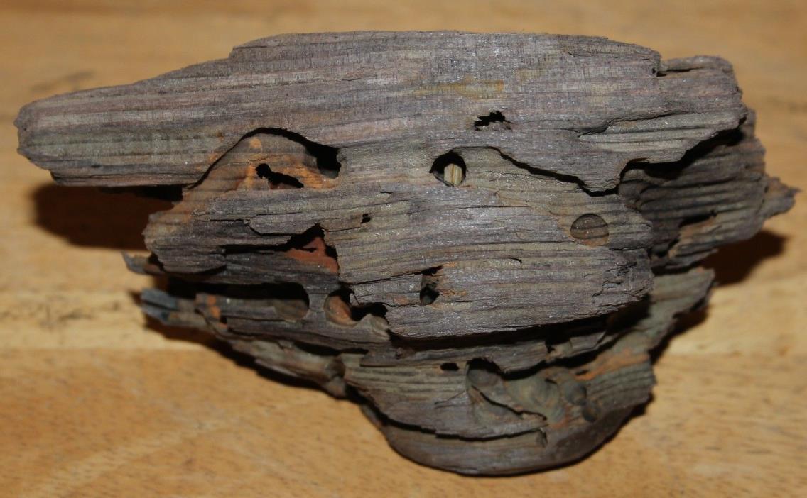 Small Driftwood Knot Wood Alaska Beach Ocean Aquarium Arts Crafts