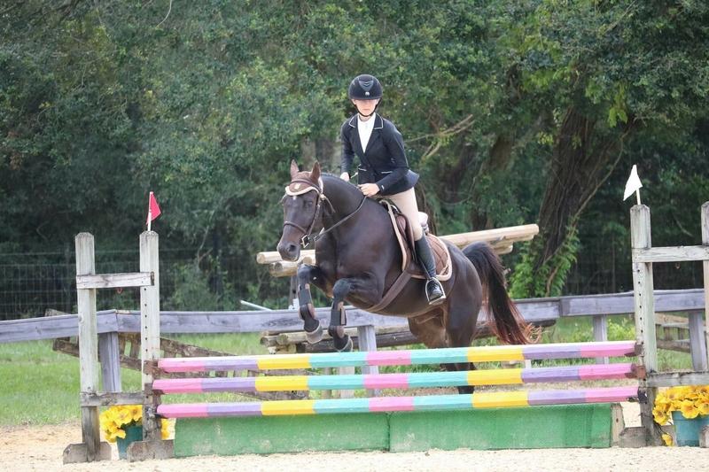 Hamilton Beautiful, smart, talented show horse