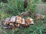 Free firewood (Fern creek)