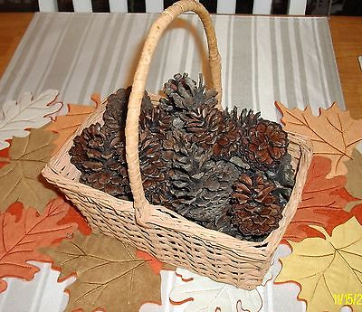 Authentic Tennessee Pinecones (25) great for Christmas Crafts and Decorations
