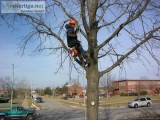 Tree Spraying and Tree Fertilization Certified Arborist